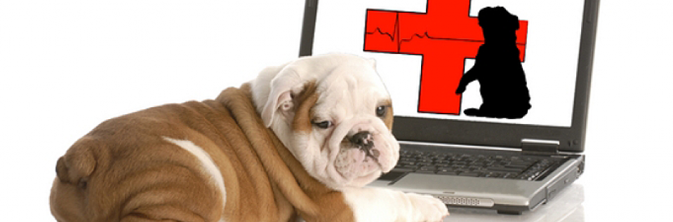 bull dog at computer with health sign