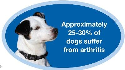 Dogs suffer