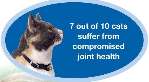 cats syffer